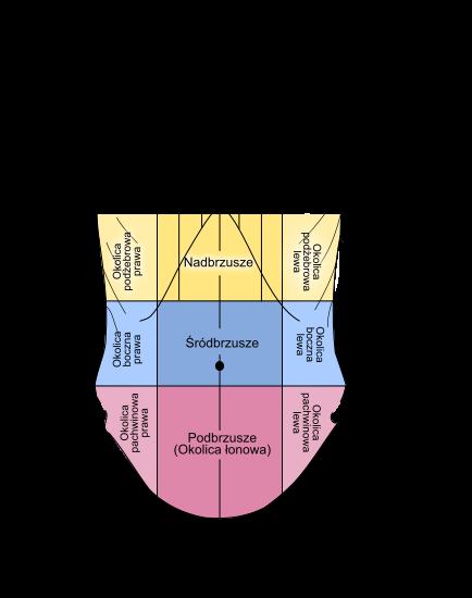 nadbrzusze Wikimedia Commons