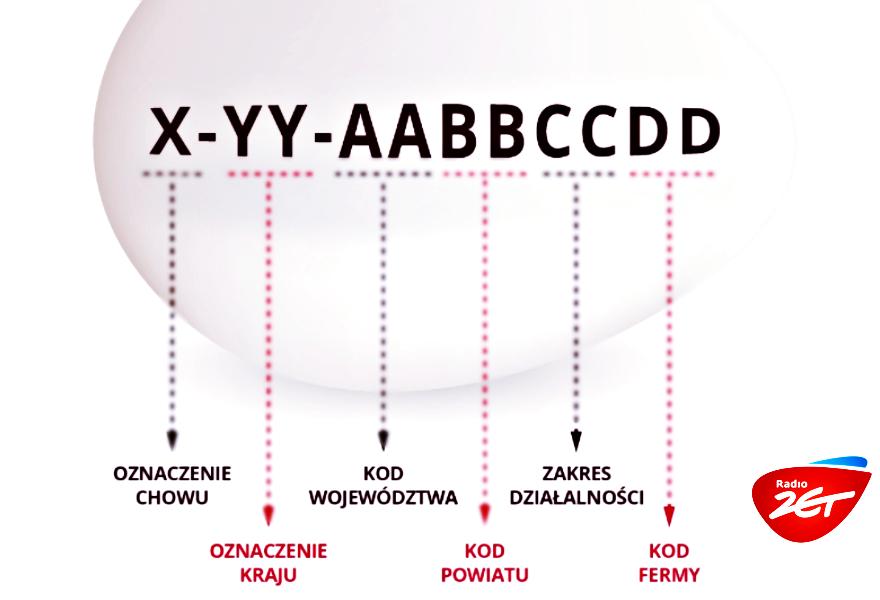 oznaczenia kodów