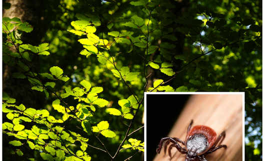 Kleszcze w lesie - największe siedliska kleszczy