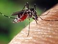 Google wymyśliło nietypowy sposób na walkę z groźnymi komarami