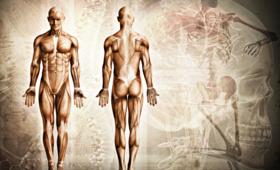 Interstitum/Śródmiąższe - nowy organ w ciele człowieka