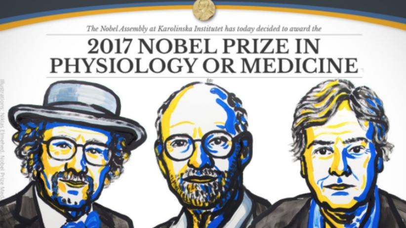 Nobel z medycyny za badania dotyczące rytmu okołodobowego