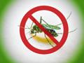 Zakaz komarów? Niecodzienny sposób na walkę z dokuczliwymi owadami