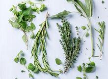 Umiesz rozpoznać te popualrne zioła?
