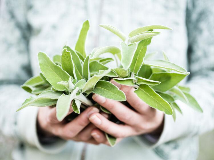Zapobiega nadmiernej potliwości i łagodzi uderzenia gorąca w okresie menopauzy