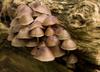Halucynogenne grzyby mogą zwalczać depresję