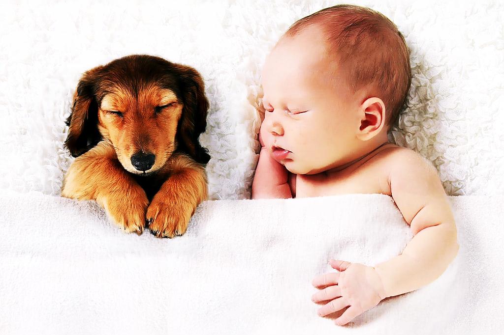 Zwierzęta mają większy wpływ na dzieci niż rodzeństwo