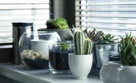 Domowa aromaterapia. Rośliny doniczkowe, które pomogą Ci zasnąć
