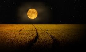 Przed nami zbożowa pełnia. Jak księżyc wpływa na nasz organizm?