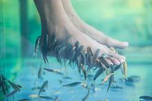 Fish pedicure to zabieg usuwania zrogowaciałego naskórka przy pomocy żywych ryb