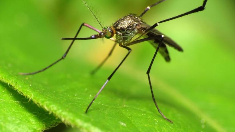 Wszystko, co musisz wiedzieć, by nie dać się pogryźć komarom