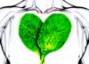 Z liści szpinaku wyhodowano tkankę ludzkiego serca