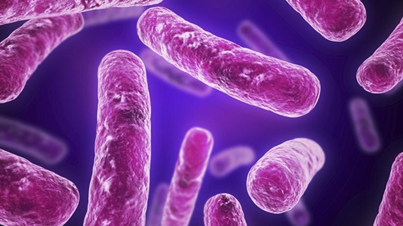 Superbakterie zjedzą Twoje śmieci