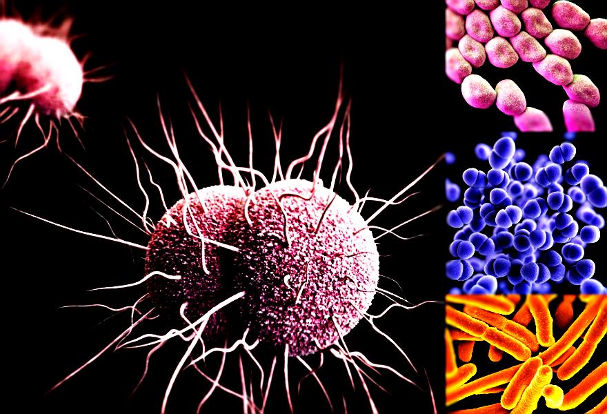 WHO: W starciu z tymi 12 bakteriami medycyna jest zupełnie bezsilna