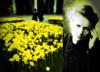 Żonkile Marii Curie - symbole walki z nieuleczalnymi chorobami