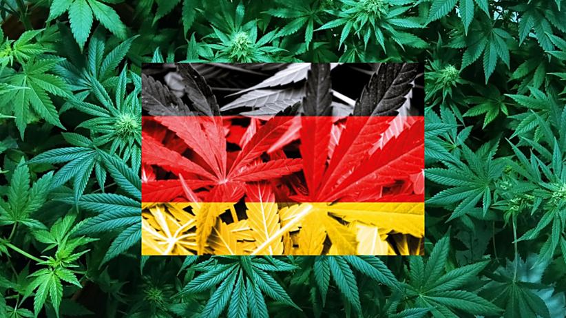 Niemcy legalizują medyczną marihuanę dla ciężko chorych pacjentów