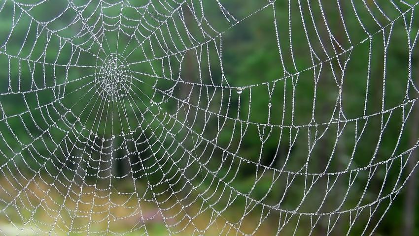 Syntetyczna pajęczyna - nowy sposób na gojenie ran