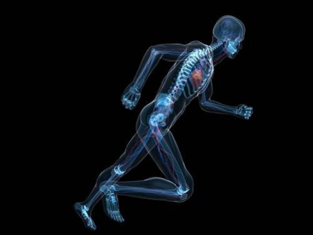 Bieganie wspomaga proces regeneracji niektórych obszarów mózgu