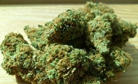 Centrum Zdrowia Dziecka nie będzie leczyć marihuaną